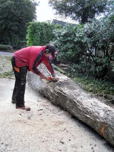 014.Rooien van bomen